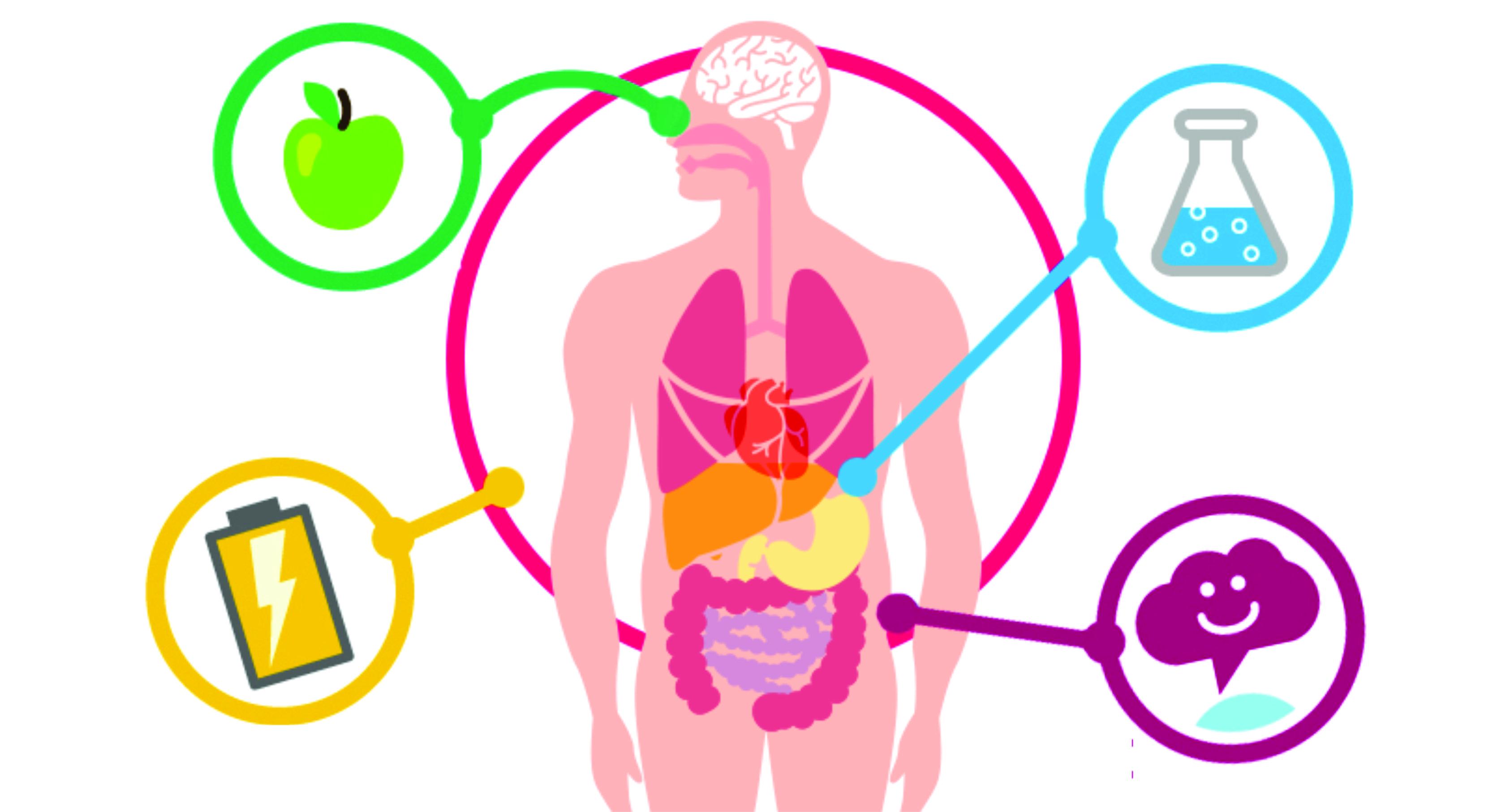 acelerando mais o metabolismo